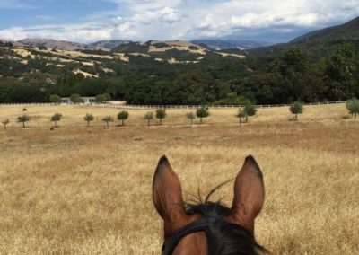 335 Acres nestled in beautiful Carmel Valley